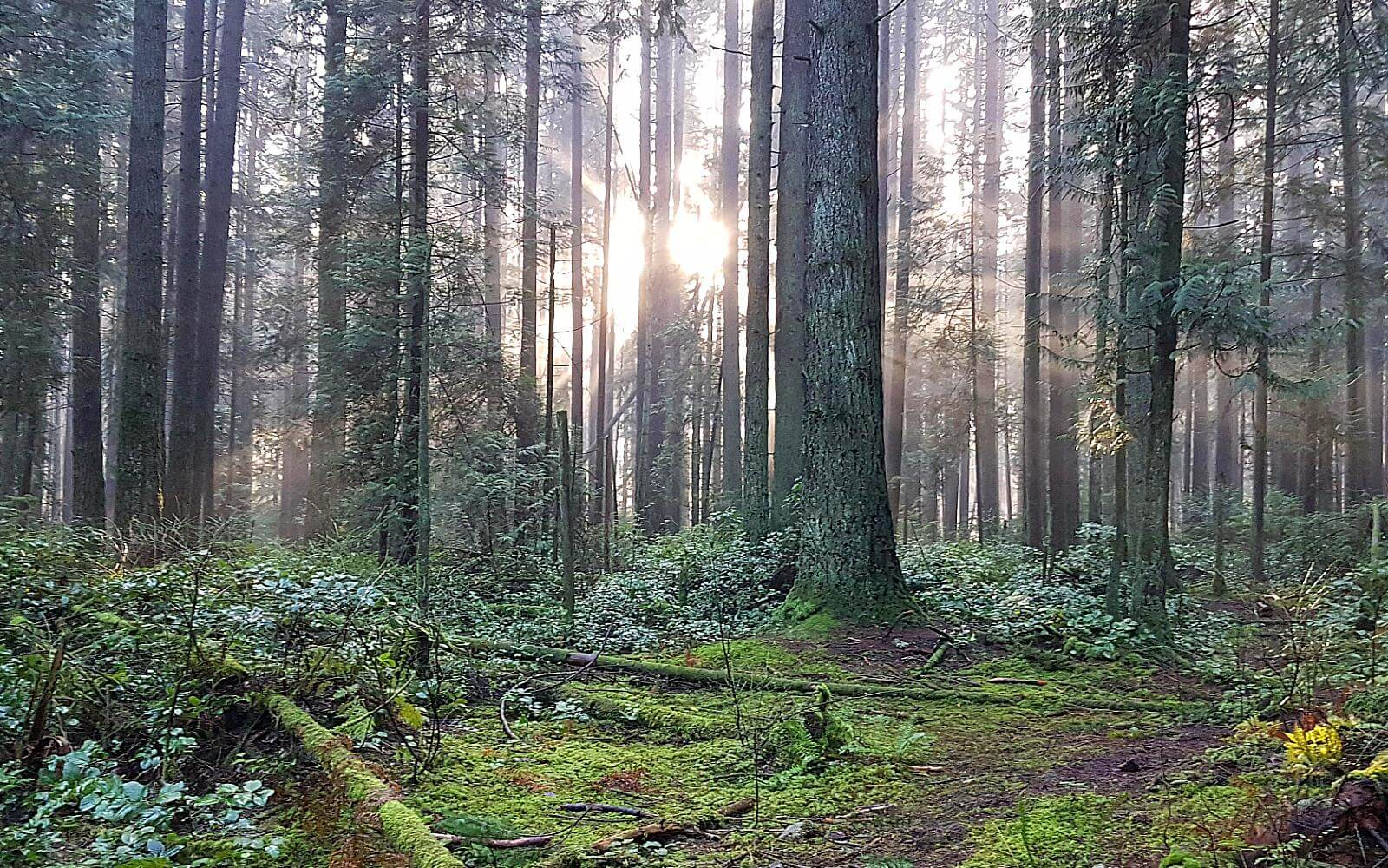sunshine breaking through the trees in pacific spirit regional park vancouver canada