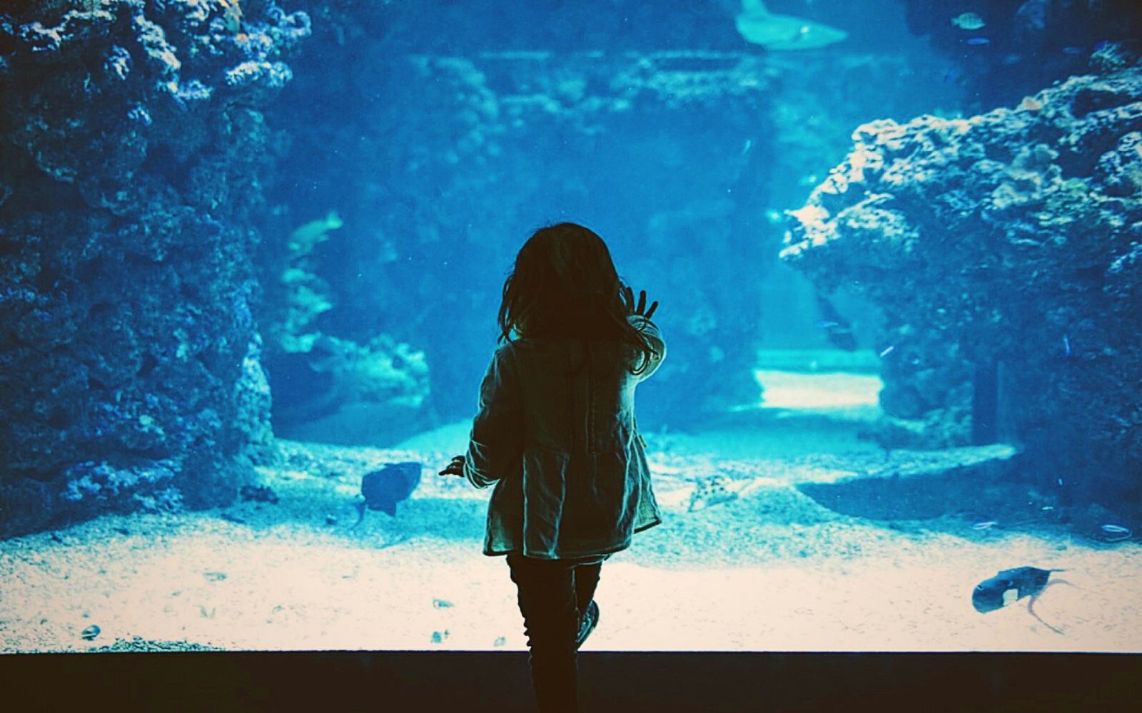 A girl watches the fish at an Aquarium