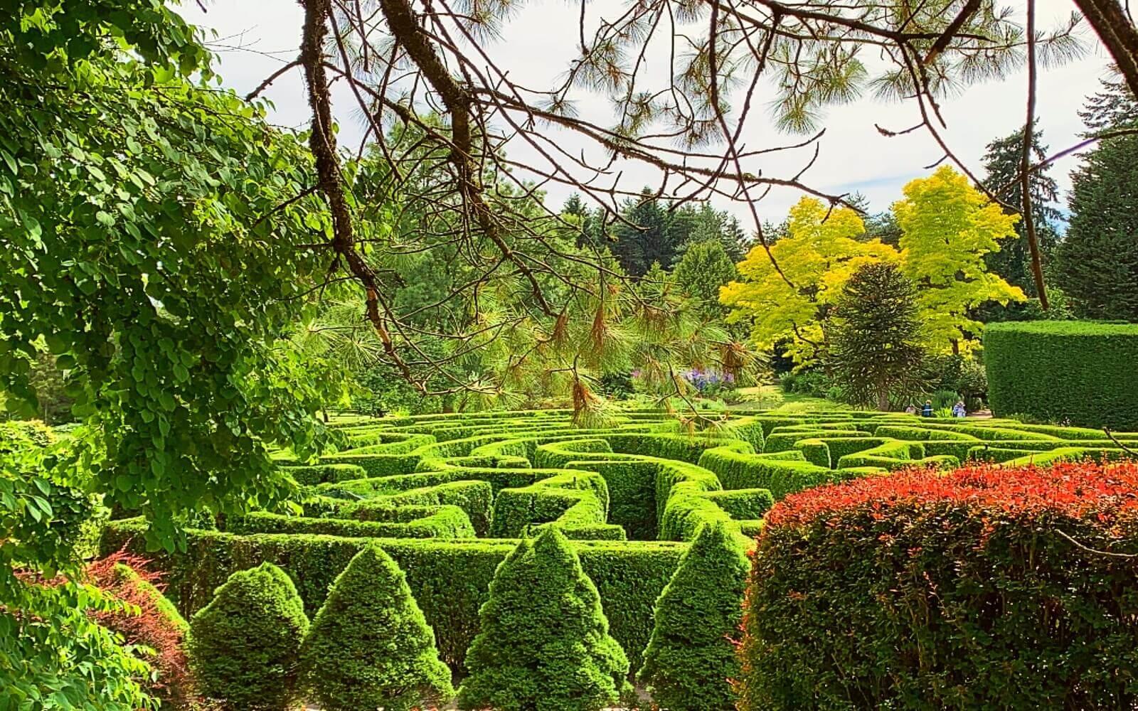 The Elizabethan Maze at VanDusen Garden